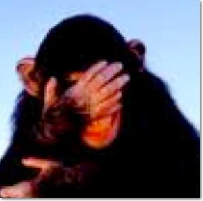 embarassed monkey