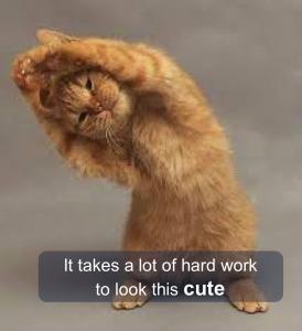 Kitten cute alone