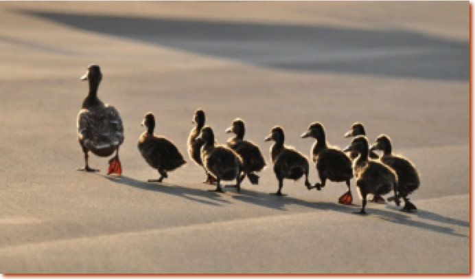 Network marketing myths - duplication